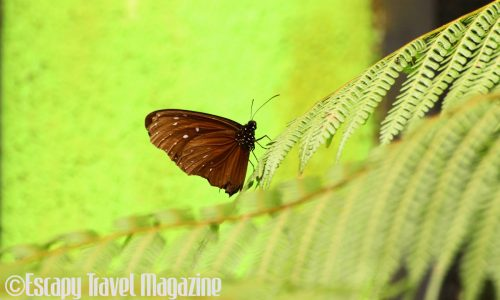 melaka butterfly and reptile sanctuary, butterfly adoption, things to do in melaka, visit melaka, save butterflies, butterflies in malaysia